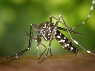 Las Apps contra mosquitos ¿funcionan?