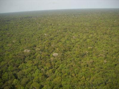 La deforestación del Amazonas se acelera