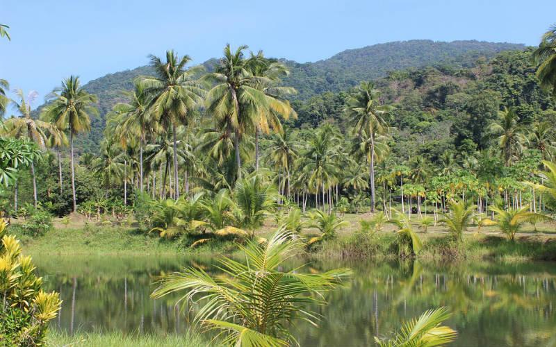 La deforestación en el Amazonas