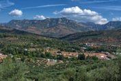 Paisaje del olivar en Andalucía