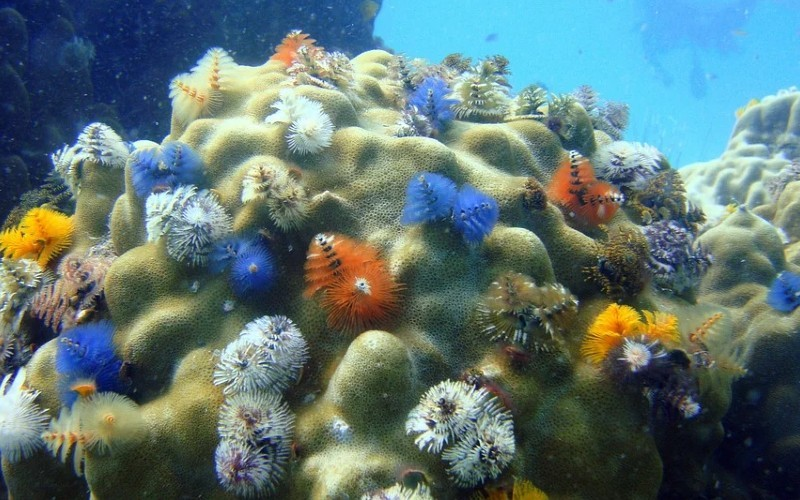 Recuperación de los ecosistemas marinos